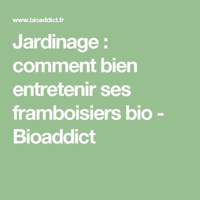 Jardinage : comment bien entretenir ses framboisiers bio - Bioaddict