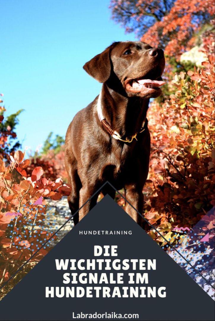 Die Wichtigsten Signale Im Hundetraining Welpenerziehung Hundchen Training Hundetraining Hundeerziehung