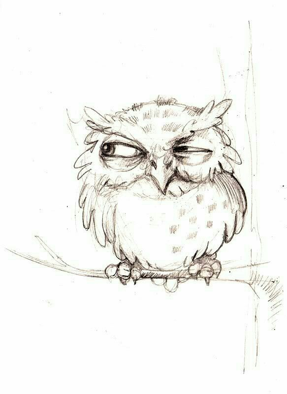 owl cartoon cartoon sketches