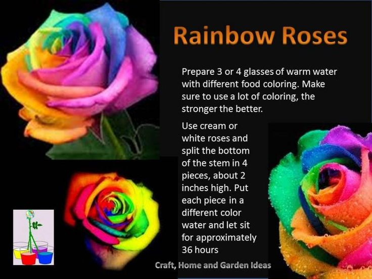 make rainbow roses for my little man pinterest