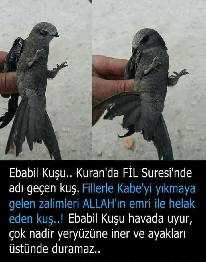 HAYVANLAR ve KUŞLAR Ender görünen Kuşlar Ender görülen KUŞLAR
