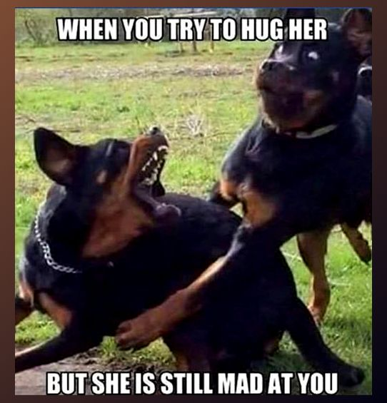 When you try to hug her, but she is still mad at you. #Relationships #CouplesCounseling #CouplesTherapy #BiteMakrs #Whoa #WatchOut #AngryWoman #AWomanScorned #Anger #AngerManagement #LashOut http://www.Zazzle.com/LongNeckGoosie?rf=238216403614574434