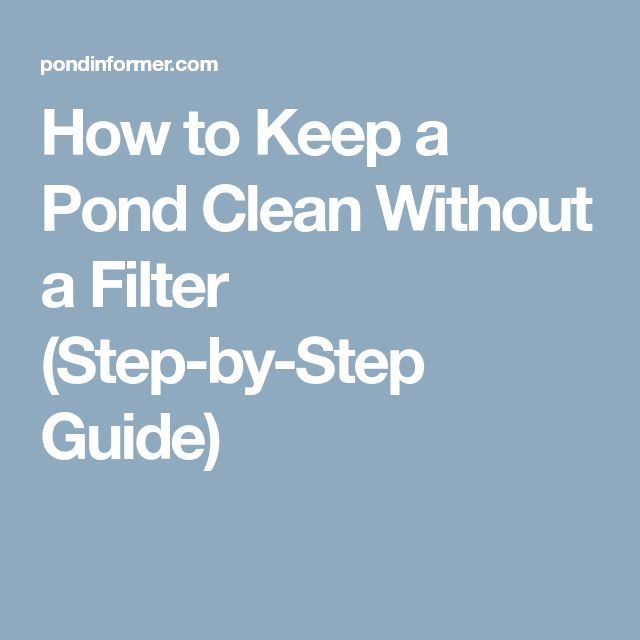 How to Keep a Pond Clean Without a Filter (Step-by-Step Guide)