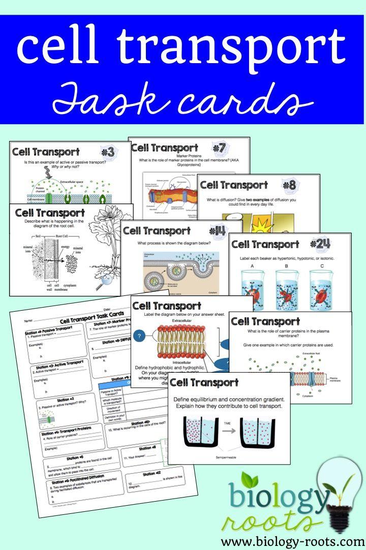 69 Best Cell Transport Images On Pinterest Teaching Biology Ap
