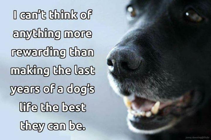 rescuedog #dog #itsarescuedoglife | Poochie Stuff | Dogs