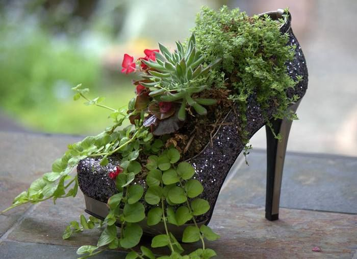 1000 Images About Succulents In Shoes On Pinterest