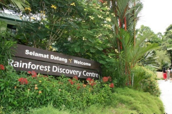 The Rainforest Discovery Centre (RDC) is the gateway to getting to know the uniqueness and importance of Borneo's rainforests. Read more @ http://www.marvelousvacation.com.my/rainforest-discovery-centre-rdc/