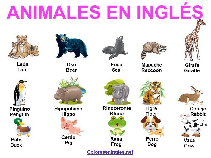 Los Animales En Ingles Colores En Ingles Animales En Ingles Ingles Para Principiantes Animales