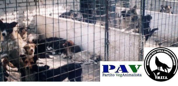 STOP AL RANDAGISMO! Chiediamo l'applicazione della Legge 281/91 in tutta Italia
