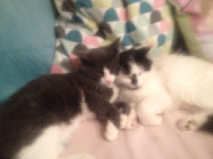 Sofia og Fluffy