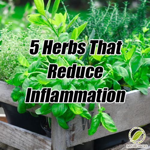 5 Herbs That Reduce Inflammation