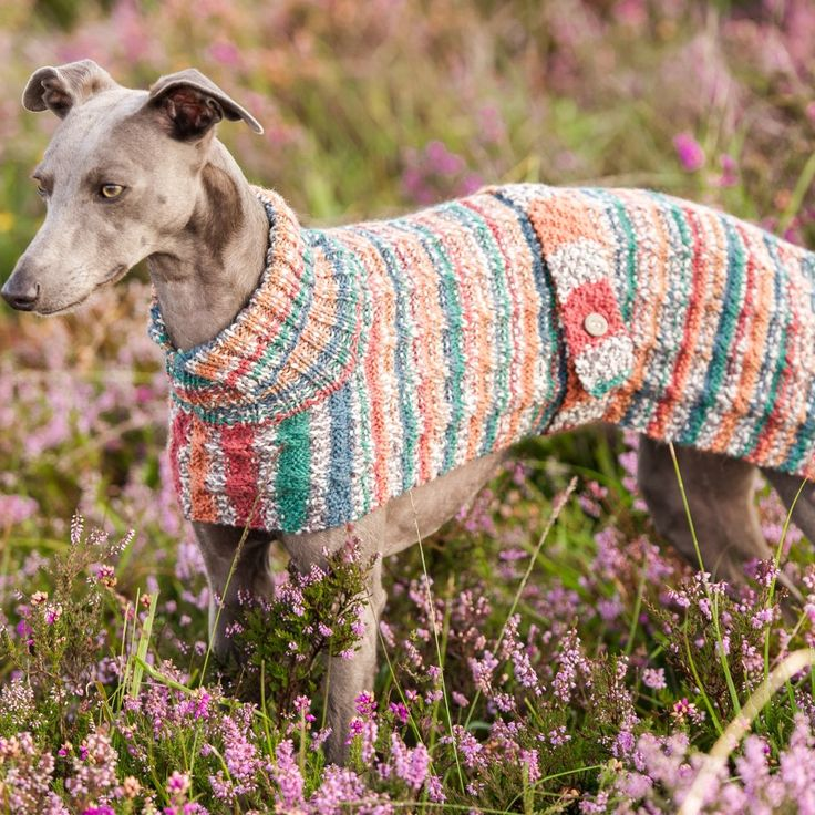 Whippet Dog Coat Knitting Pattern : 38 best images about Whippet Crazy on Pinterest Knitting ...