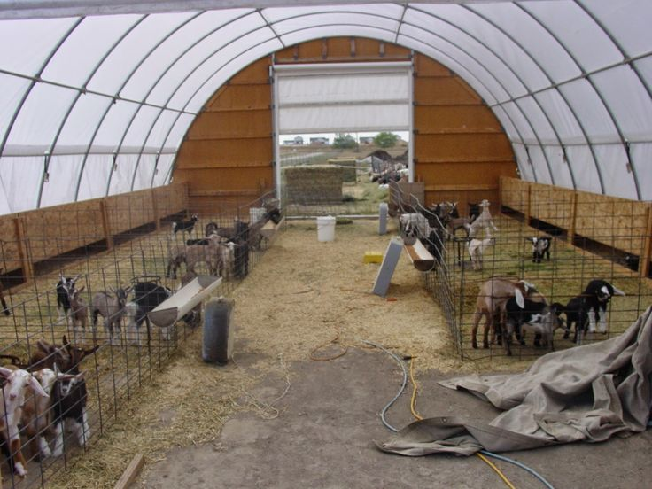 17 best images about geiten on pinterest baby goats for Dairy barn plans
