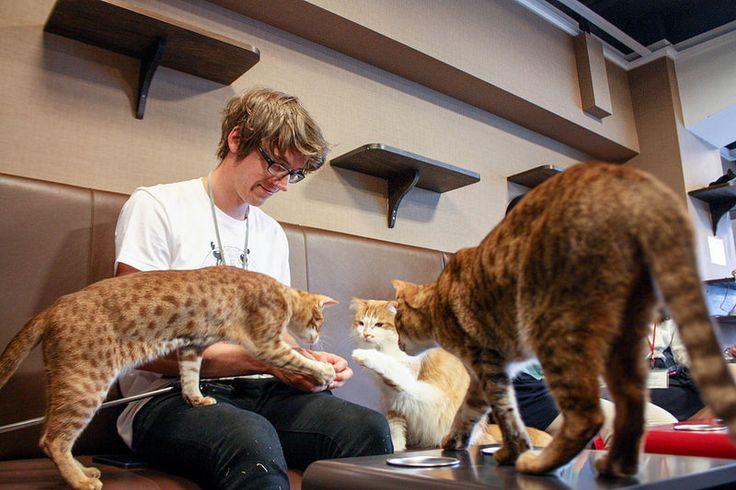 Cat Cafe. Tokyo. Japan.