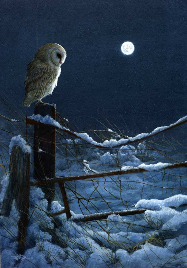 Owl ~ art by Jeremy Paul, http://www.jeremypaulwildlifeartist.co.uk/galleries …