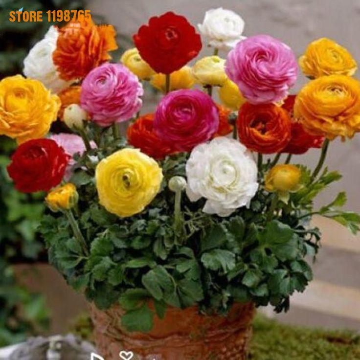 200pcs/bag Ranunculus Seeds, Potted Plants Bonsai Seeds,flower Seeds For Sale Indoor Home Garden Farm