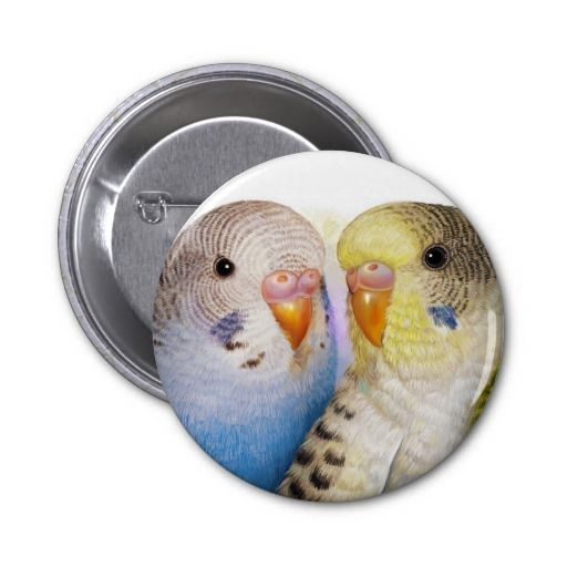 Budgerigars 2 pinback. Available also in different button shape and size. #zazzle #petopet #pet #bird #parrot #budgie #parakeet #perruche #parkit #budgies #parakeets #budgerigars #budgerigar #cute #realism #painting #portrait #mug #emmil #deviantart #for #sale #merchandise #pin #button