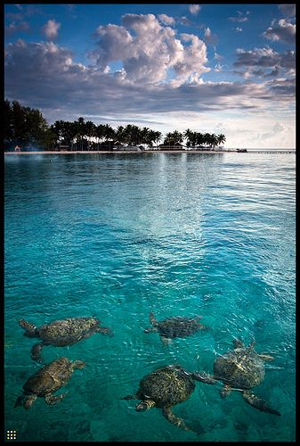 Derawan Island, Indonesia    This is not my photo & I've never been here but the photo is beautiful.