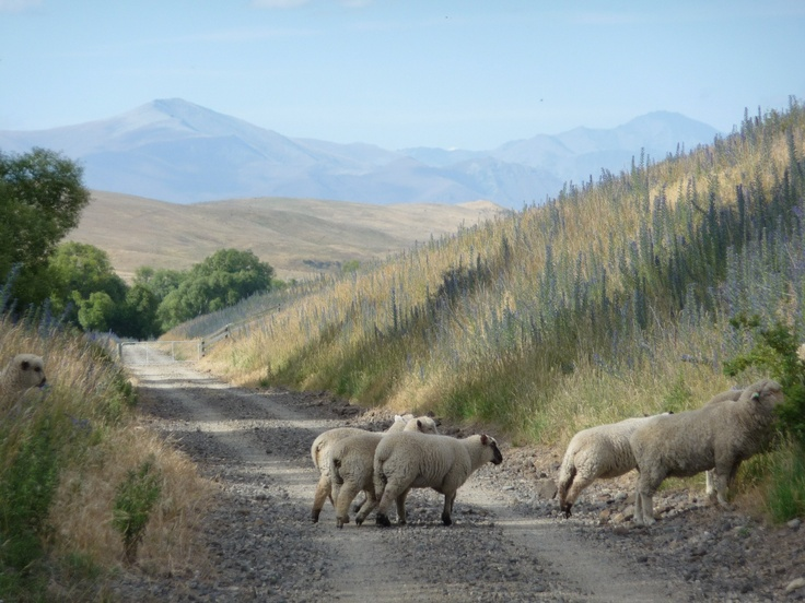 along the Otago central rail trail