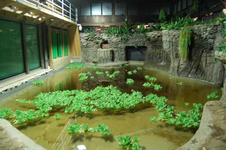 The Ultimate Indoor Gator Home Turtle Enclosures