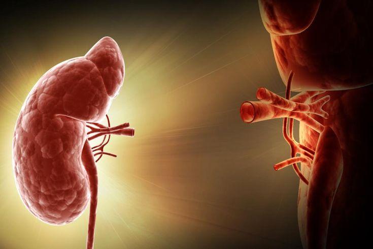 Wie funktioniert eine Nierentransplantation?