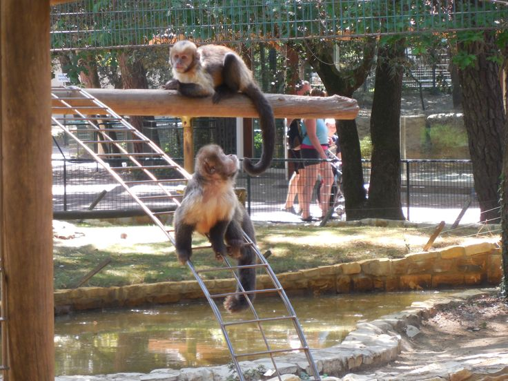 Best Zoo La Palmyre Images On Pinterest Flamingo Zoos And - The 12 best zoos in the world