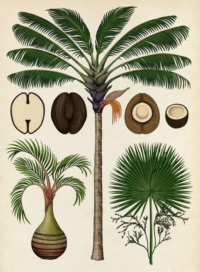 06-katie-scott-palms-botanicum