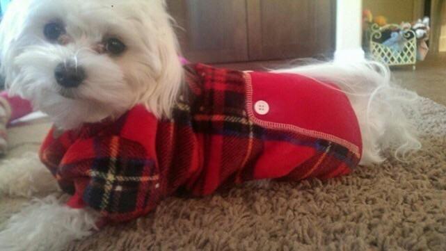 Here's little Kona in her lumberjack outfit :)