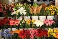 Delivery Flower Shops,  http://adsandclassifieds.com/AdDetails.aspx?Id=120128&v=0&a=d  Flower Shops Near Me,Flower Shop,Flower Shop Near Me,Flower Shops,Flowers Near Me,Floral Shops Near Me