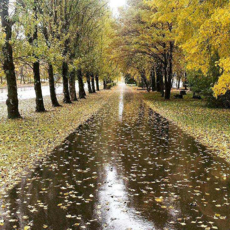 картинка дождя в парке крымских
