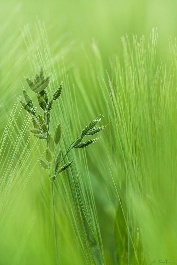 Gröna grässtrån!