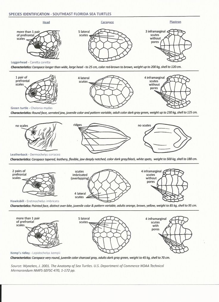 Sea turtle ID sheet