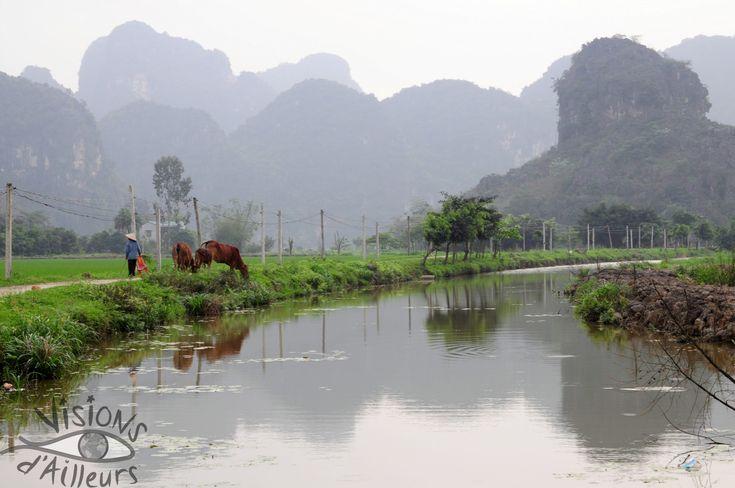 Depuis Ninh Binh, je rejoins la baie d'Halong terrestre à Tam Coc pour un tour en bateau au milieu des rizières, puis le Cuc Phuong national park, l'un des plus importants du Vietnam...