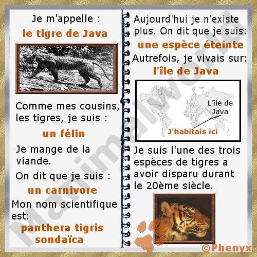 Fiche pour enfant du tigre de Java