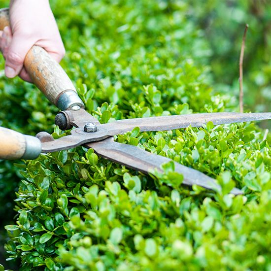 Where would we be without our trusty gardening tools? With a little tender loving care, there's no reason they shouldn't last for many years. You can easily maintain your gardening tools to keep them as good as new. From MOTHER EARTH NEWS Blog