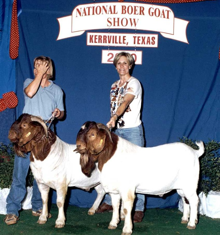 17 Best images about Boer Goats on Pinterest   Baby goats ... - photo#21