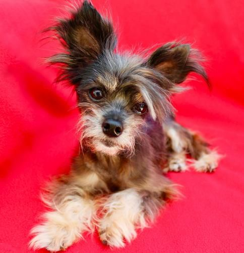 Lovebugs Rescue - Lovebugs Rescue - Adoptables | Southern California 501c3 Non-Profit Foster Based Animal Rescue