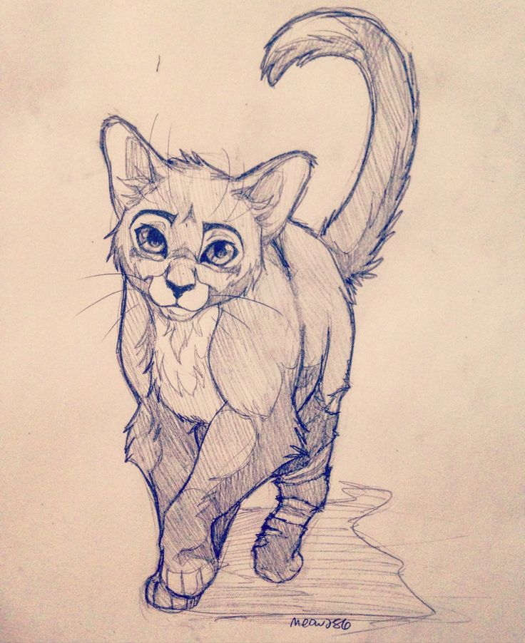 Warrior Cat Anime Drawings