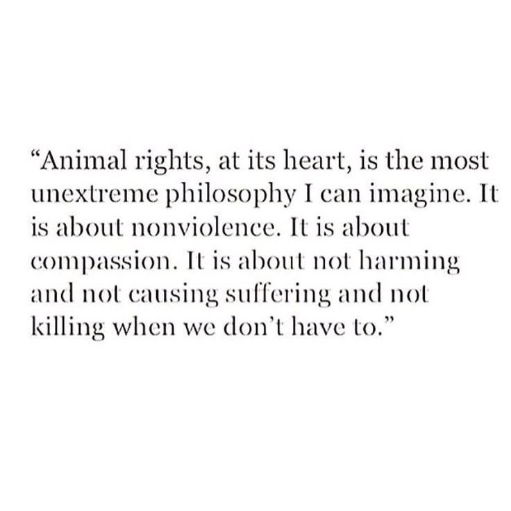 Animal Rights  Current Debates and New Directions  Cass R     essay on animal rights jpg