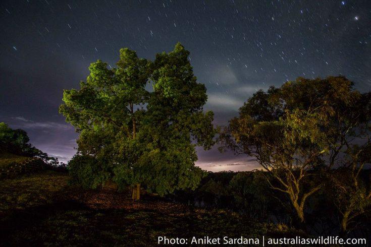 A #Stormy #Night in south-western #NSW #Australia #aus_wildlife