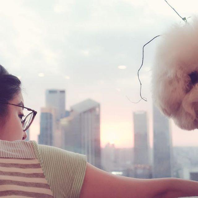 夕焼け小焼けー🎶明日も楽しい日になりますように🙌ところでアニーさん、いつの間に触覚生えたん? #ビションフリーゼ #dogstagram  #instadog #doglife #bichon #bichonfrise #dog #sunset #夕焼け #夕陽 #夕日 #太陽 #窓辺 #窓 #window #街 #町 #景色 #夕方 #お疲れ様 #愛犬 #犬 #モフモフ #比熊犬 #비숑프리제 #夕暮れ