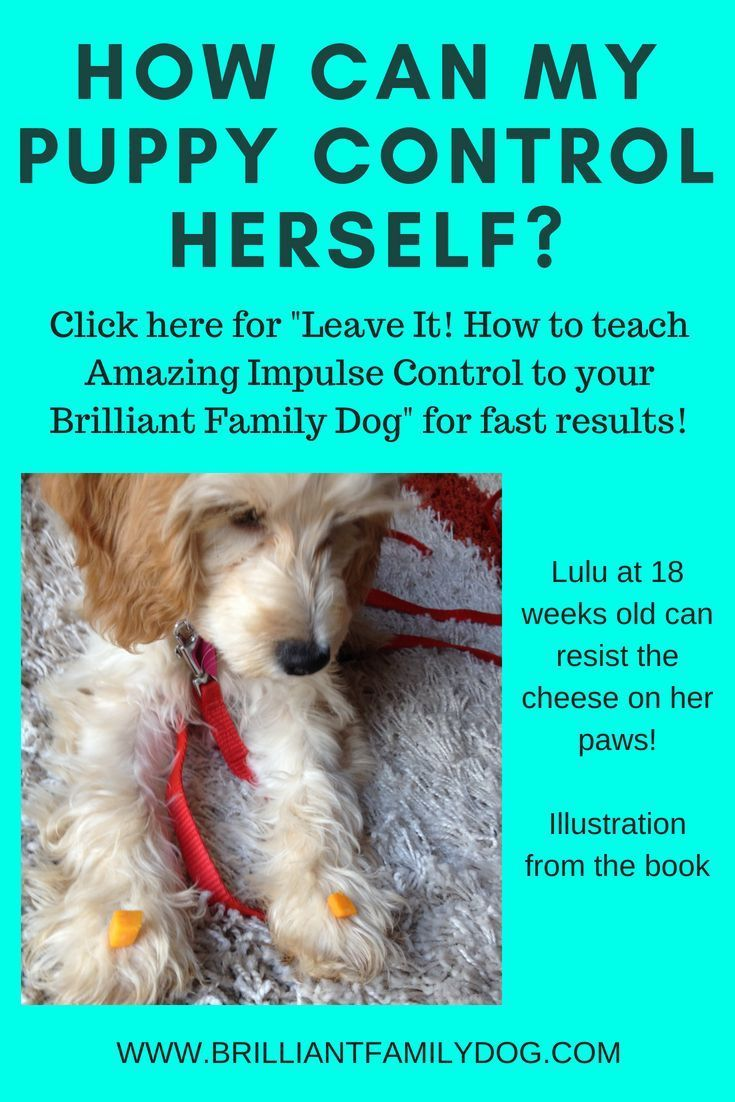 Leave It An Essential Dog Training Skill How To Teach Amazing Impulse Control To Your Brilliant Family Dog Book 2 By Beverle With Images Dog Training Family Dogs Puppies