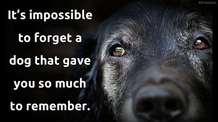 Impossible to forget #DogQuotes