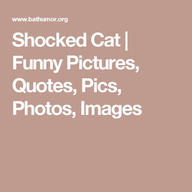 Shocked Cat | Funny Pictures, Quotes, Pics, Photos, Images