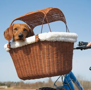 Pup in a basket #strikesourfancy: Bicycles Baskets, Wicker Bicycles, Small Dogs, Bike Riding, Pet, Tagalong Wicker, Bike Baskets, Bicycle Basket, Animal