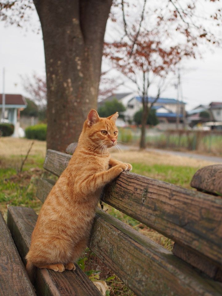 cat on a bench - what's he looking at I wonder