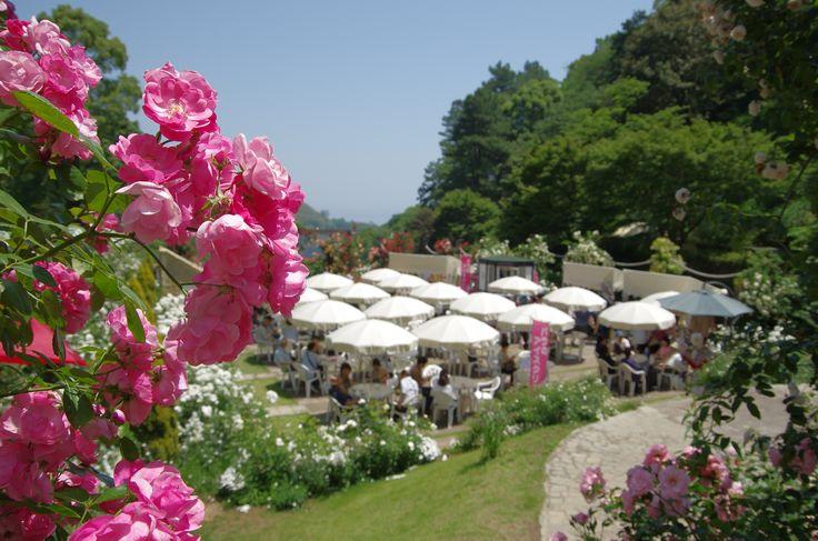 花に囲まれたオープンカフェ