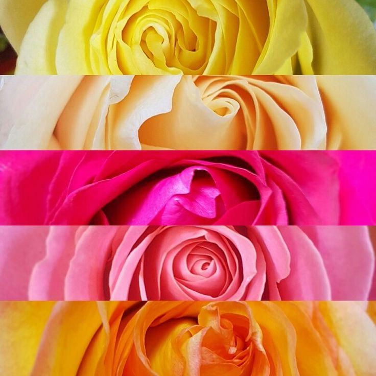 Flower Wallpaper 🌸🌸🌸