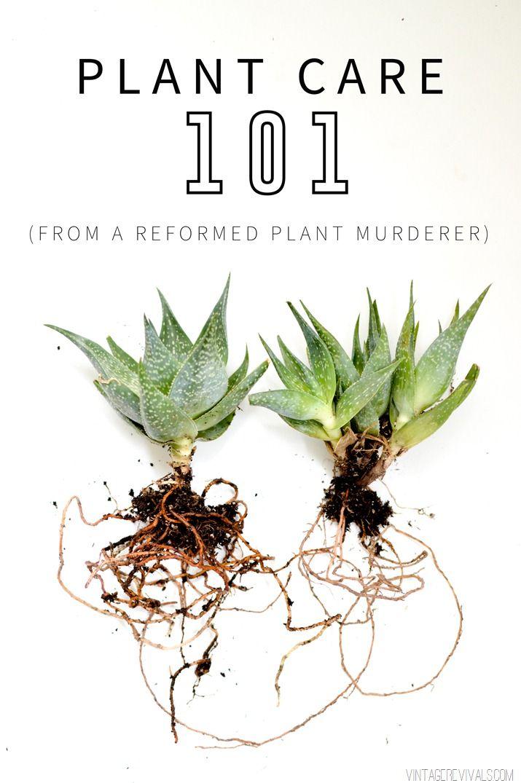Vintage Revivals   Plant Care 101: From a Reformed Plant Murderer