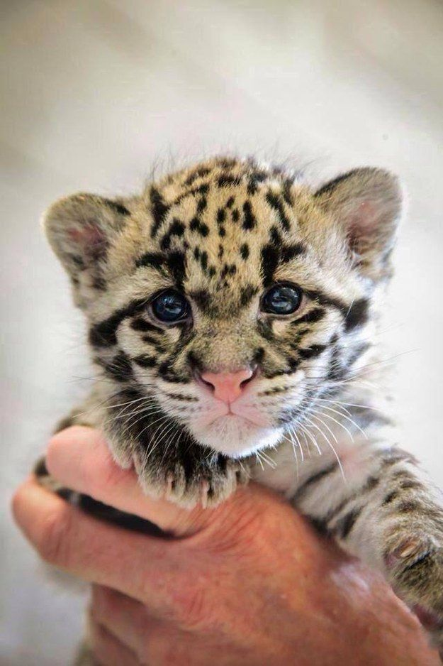 And this fluffball of cuteness. | The 37 Cutest Baby Animal Photos Of 2014